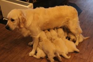 Valper og Hundepensjonat 14.09.15 083